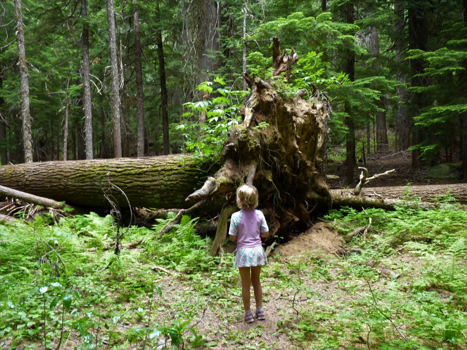 A little girl standing in front of a fallen tree.