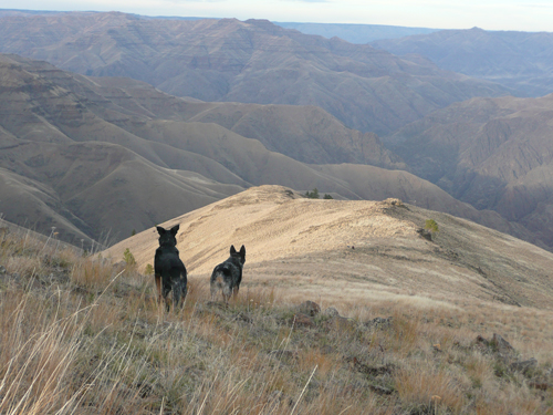 """Wilma Jane and John on Cemetery Ridge, Hells Canyon"" Photo: Julie Oeinick"