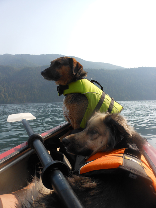 Casper and Saejun resting after a long swim at Pend Oreille. Photo: Heidi Piccirello