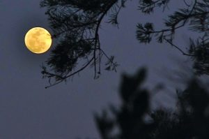 Cure your full moon fever with a float along the lower Spokane River.