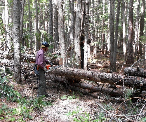 Clearing the trail. Photo courtesy of Priest River Valley Back Country Horsemen