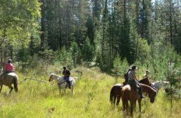 On Moose Ridge. Photo: Sherry Mundt