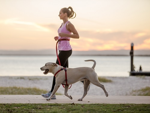 Running with a four-legged pal is as much about compromise as anything else. But it's worth it. Photo: Charlotte Reeves
