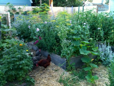 Backyard Permaculture urban permaculture: design your own backyard oasis | out there outdoors