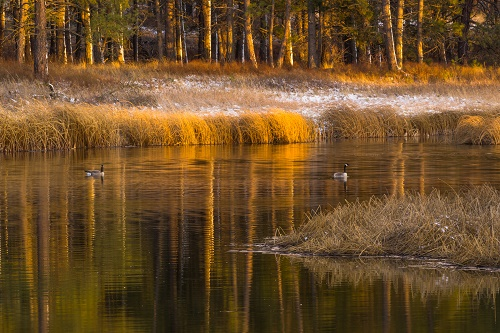 Canada geese at Turnbull Wildlife Refuge. Photo: Aaron Theisen