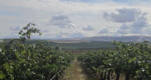Photos courtesy of Washington State University Viticulture and Enology Program