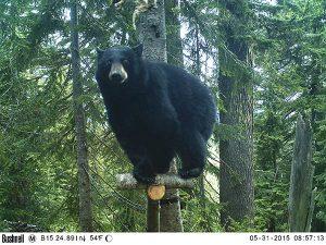 Photo courtesy of Conservation Northwest.