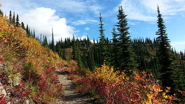 Hiking trail during fall with colorful leaves.
