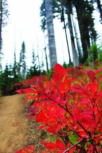 The fruits of fall on Mt. Spokane. Photo: Holly Weiler.