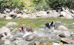 riverdogsWEB