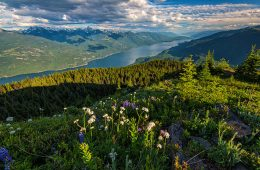 View of Kootenay Lake with wildflowers in the foreground.