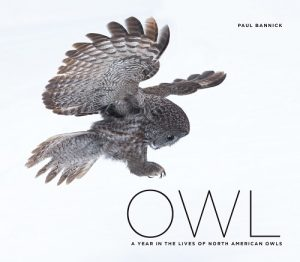 owl_cover