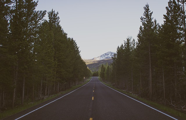 Photo of tree-lined road and mountain in the distance.