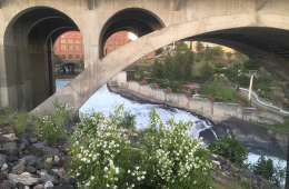 Syringa and river smells combine to usher in summer. // Photo: Derrick Knowles
