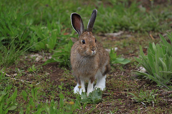 Photo of rabbit by Holly Weiler.