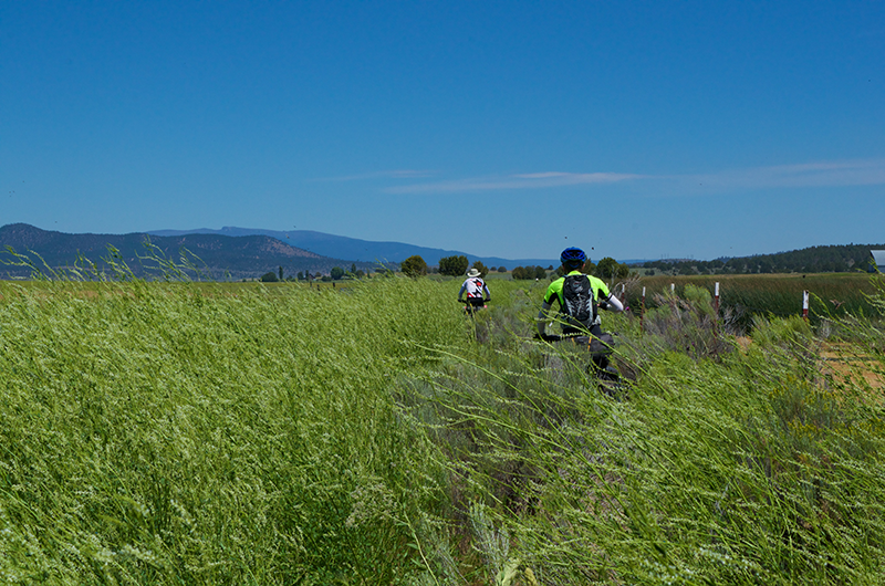 Two brothers biking through tall vegetation in the wetlands along the Oregon Outback Route. Photo by Hank Greer.