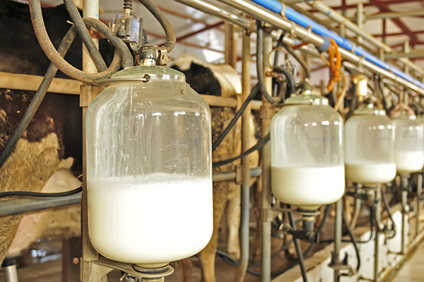 Photo of milk, in its natural form.