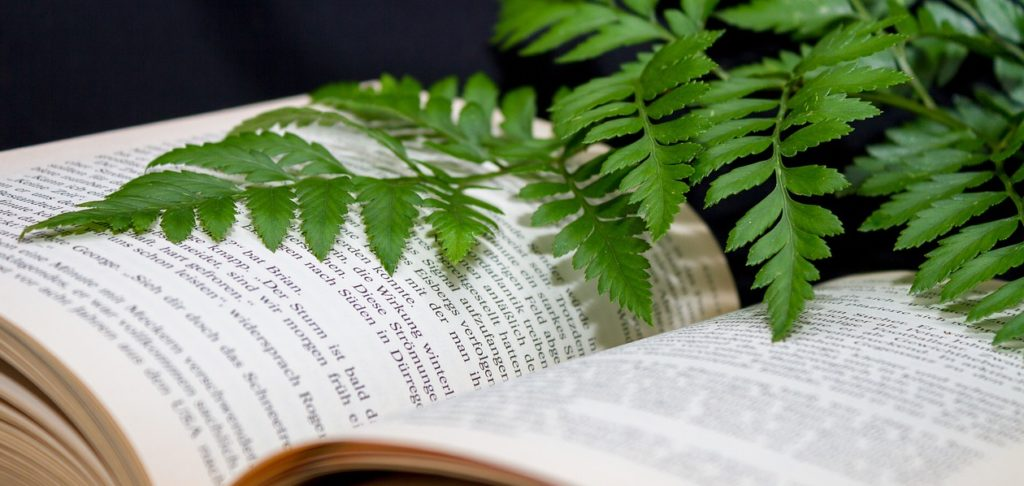 Photo of book and fern.