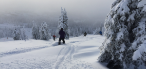 Photo of skiers in powder by Shallan Knowles.
