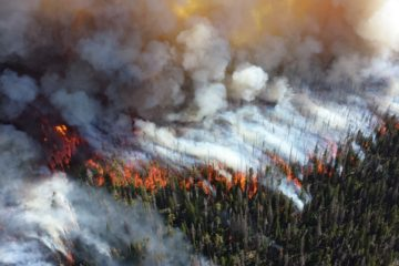 Photo of forest fire.