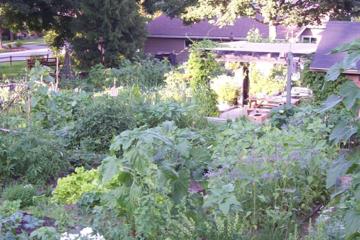 Photo of community gardens.
