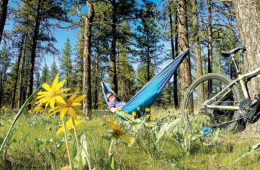 photo of hammock strung between trees in field with bike in foreground.