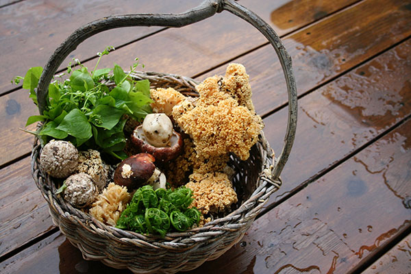Basket with herbs and spring kings mushrooms.