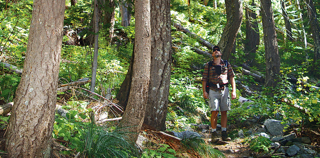 Photo of OTO editor, Derrick looking up at trees.