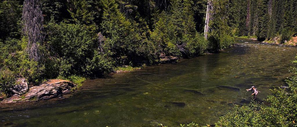 Photo of angler along shorel.