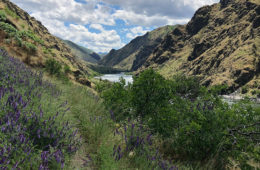 Photo of the Hells Canyon Wilderness and the Snake River in the background.
