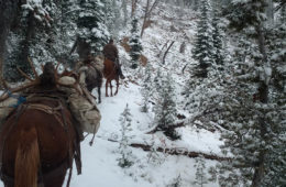 Photo of horses carrying out packs of bull elk through snow covered trees in the Frank Church Wilderness area.