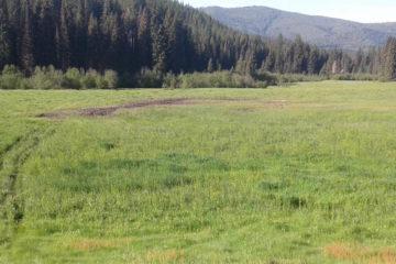 Photo of tire ruts through field.