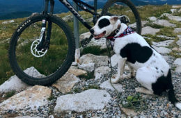 Photo of author's dog, Grouper, next to mountain bike on trail at the summit of Mount Spokane.