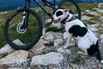 Photo of author's dog, Grouper, next to mountain bike on trail at the summit of Mount Spokane.