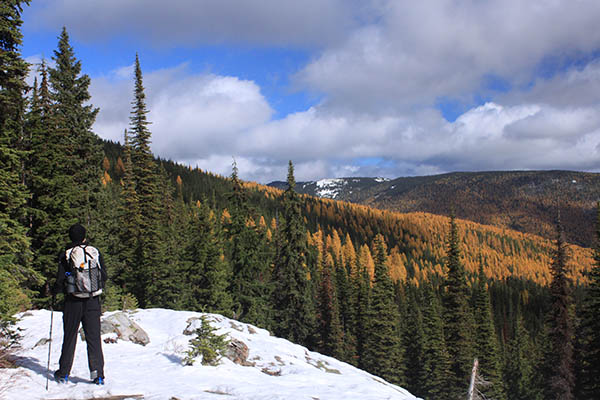 Photo of hiker standing on snow covered ledge admiring the golden larch trees.