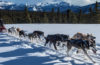 Photo of dog sled team with mountains in the background.