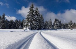 Photo of cross-country ski tracks in snow.