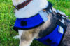 AR Base Shield Protective Snow Bib for Dogs