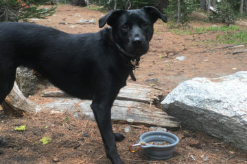 Photo of black lab on trail.