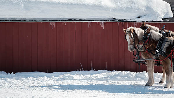 Photo of horses outside of a red barn.