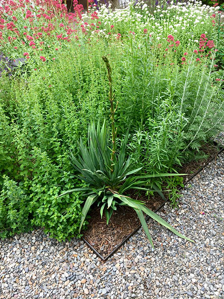 Photo of Yucca and Oregano along with other pollinators.
