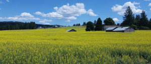 Photo of barn in spring field