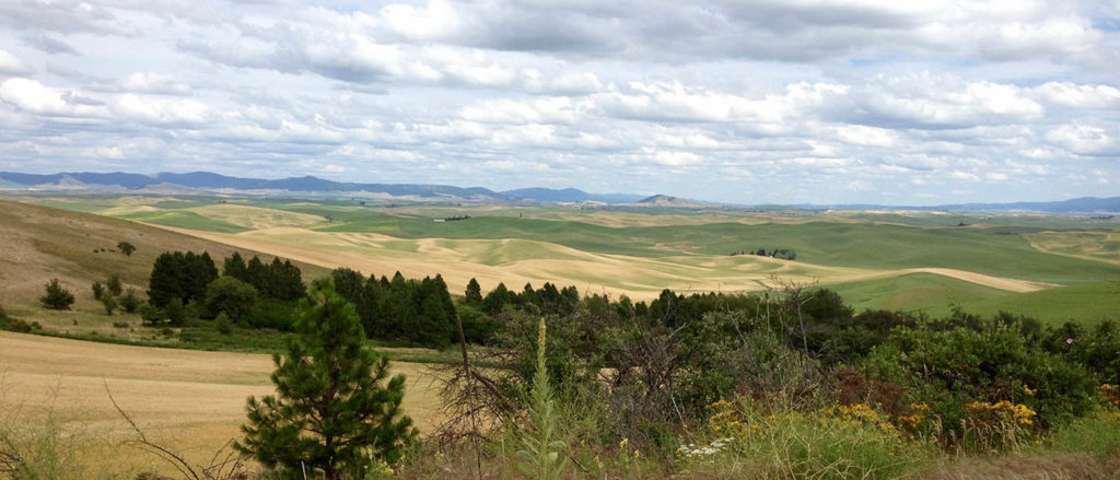 View of the Palouse from the summit of Steptoe Butte.