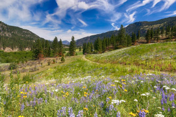 Photo of trails with mountains in background and wildflowers in foreground.