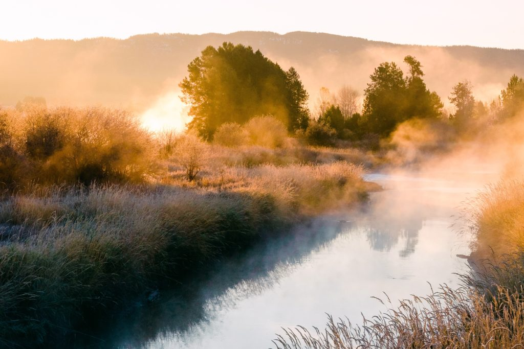 Payette River at sunrise with steam rising off the water's surface, with golden light on the surrounding trees and bushes.