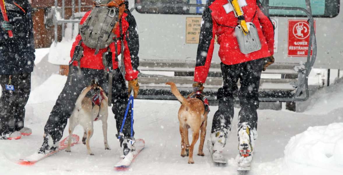 avalanche dogs loading onto ski lift.