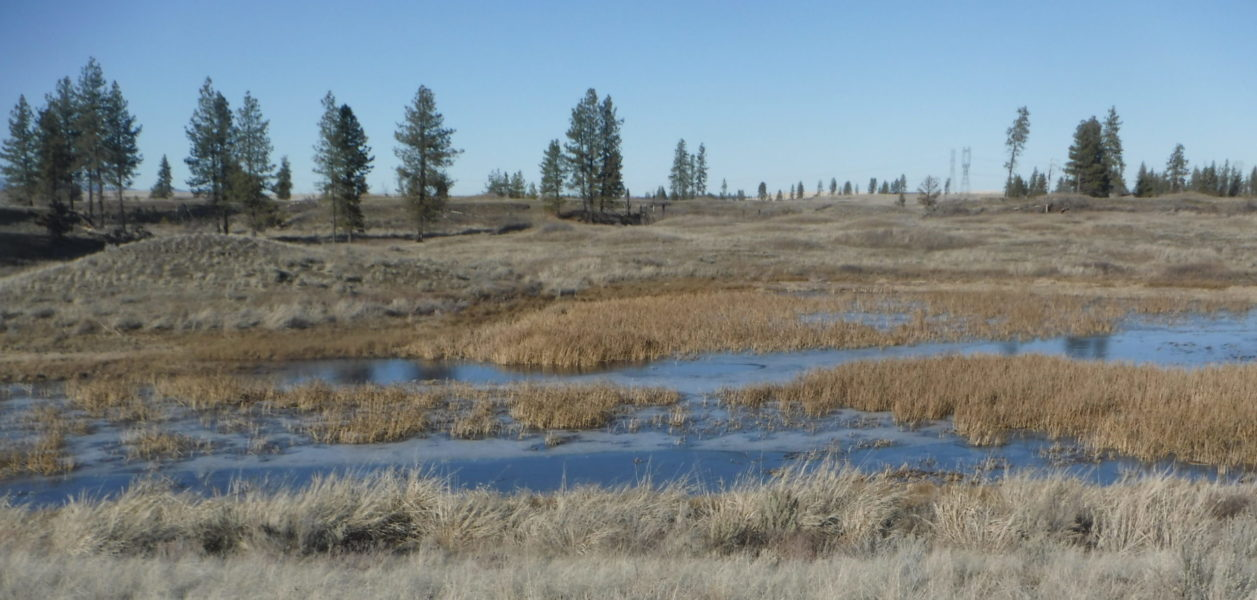 A marsh field during fall.