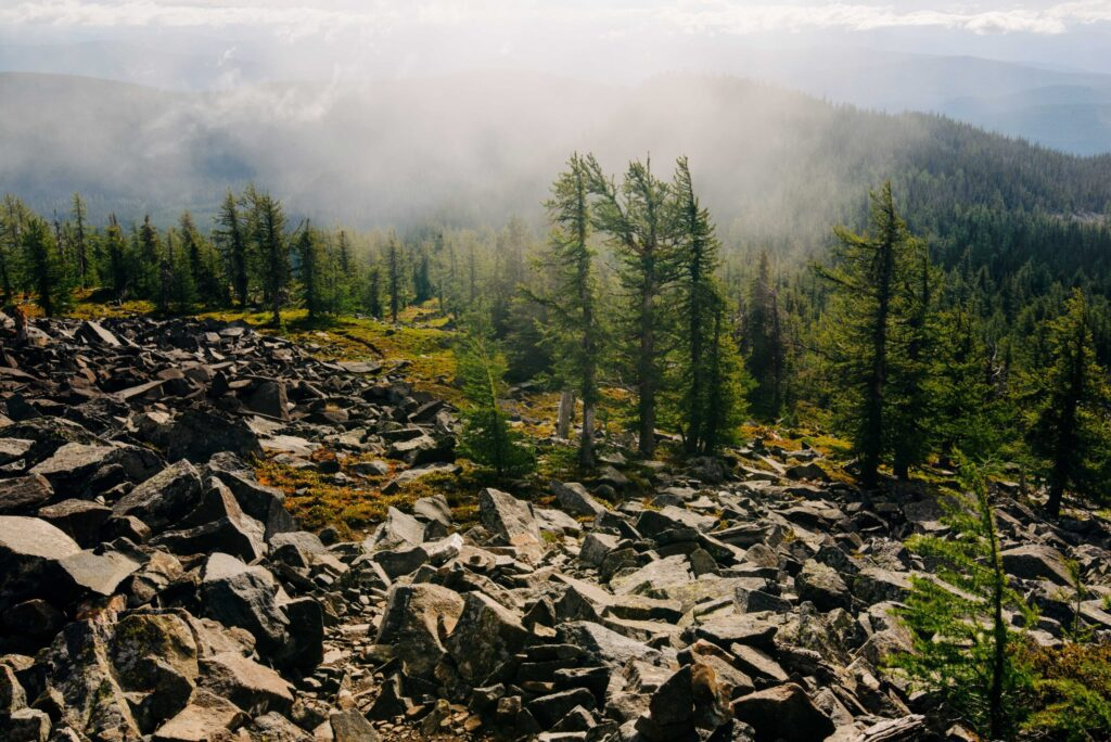A foggy, rocky area lined with trees.
