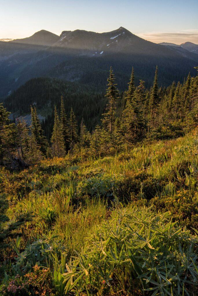 Mountain vegetation overlooking large mountains.