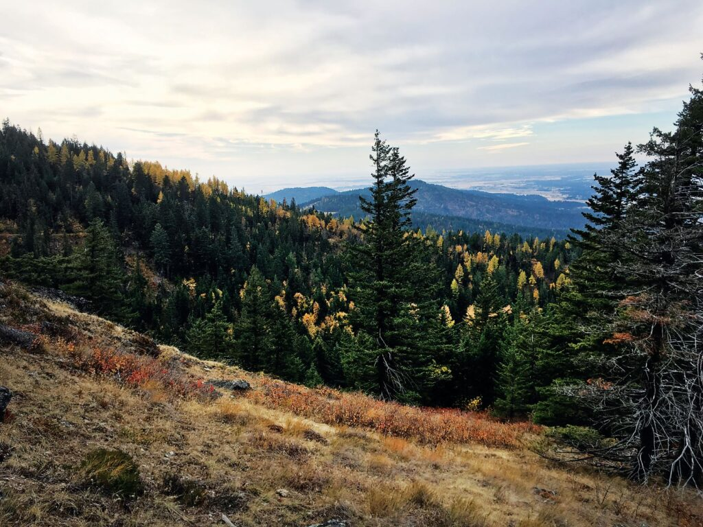 A forested mountainside during fall.